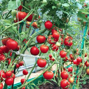 tomatenhaus bauen 1000 ideen zu tomatenhaus selber bauen auf pinterest tomatenhaus selbst. Black Bedroom Furniture Sets. Home Design Ideas